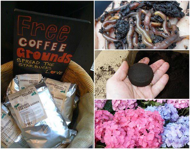 10 Genius måder at bruge gamle kaffegrums i din have