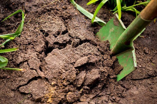 11 Tid at spilde ting, du laver i haven, at du skal stoppe lige nu