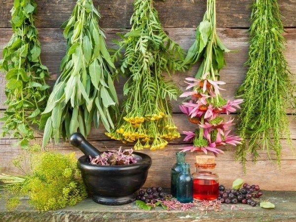 12 Healing urter, du har brug for at vokse i din medicinske haven
