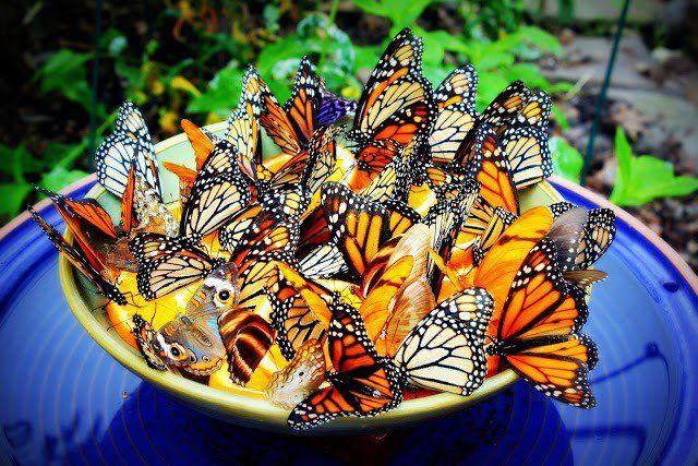 14 Smukke diy sommerfugl foderautomater til at gøre din have en sommerfugl paradis