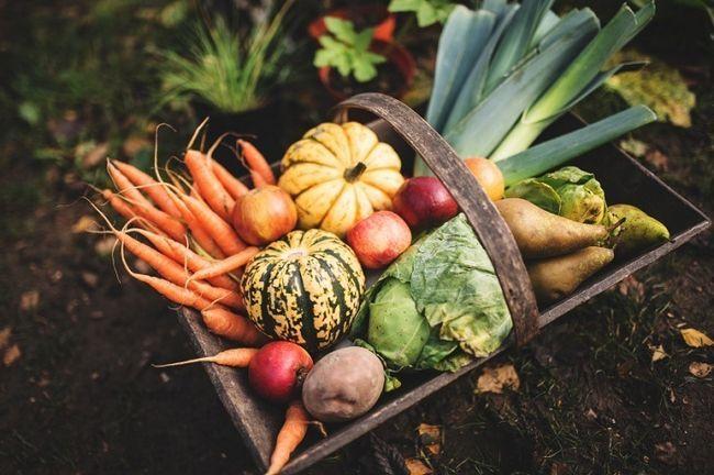 17 Organiske hemmeligheder til turbo din have høst