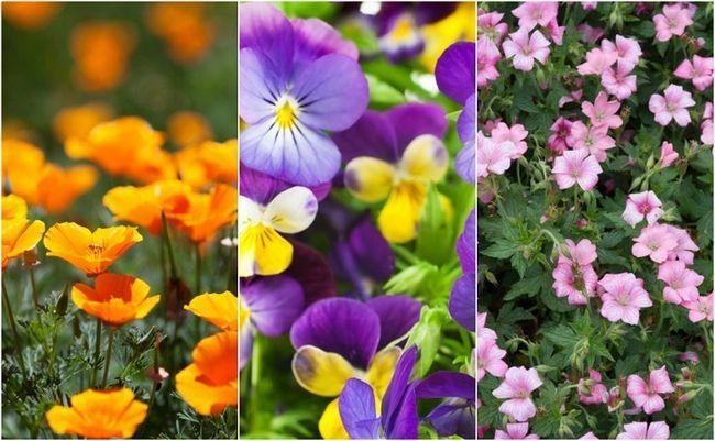 18 Letteste & smukkeste blomster alle kan vokse i deres have