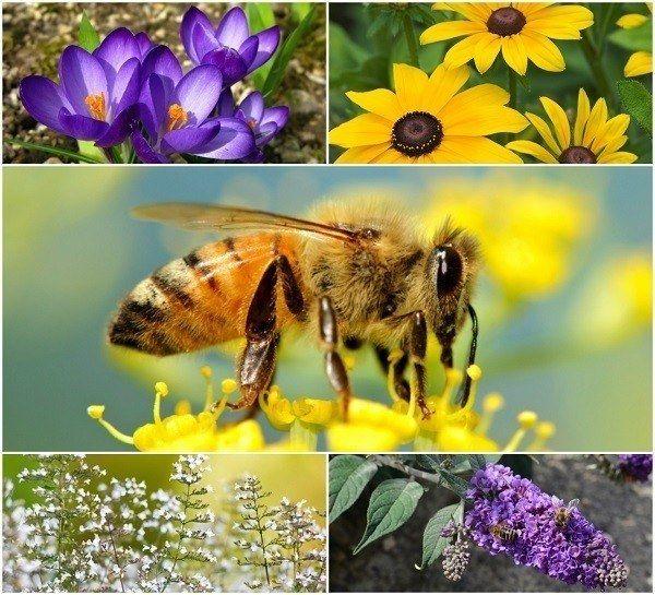 20 Smukke blomster for at tiltrække bier til din have