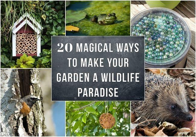 20 Magiske måder at gøre din have et dyreliv paradis