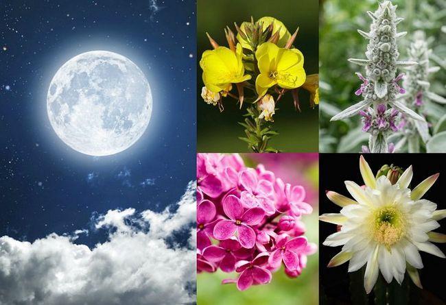 20 Planter til at vokse i din måneskin haven
