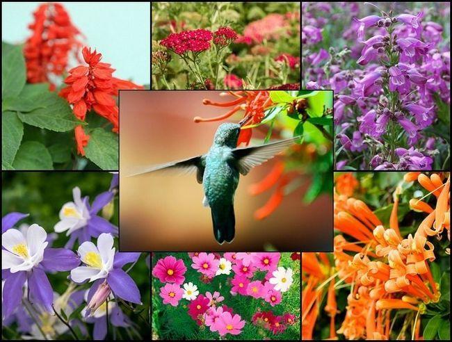 21 Glorious haveplanter, der tiltrækker kolibrier
