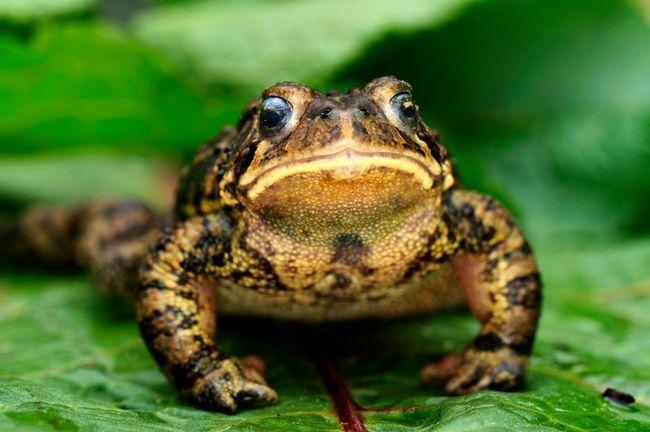 9 Måder at tiltrække frøer og tudser til din have
