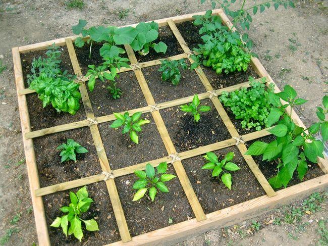 Hvordan til at planlægge en kvadratfod køkkenhave - den nemmeste måde at dyrke rigeligt grønt