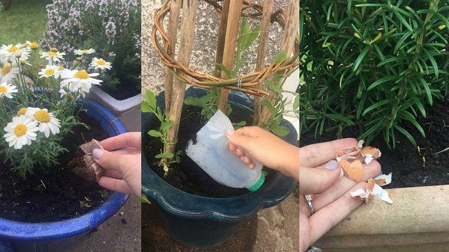 Weird måder at bruge 21 husholdningsartikler i din have